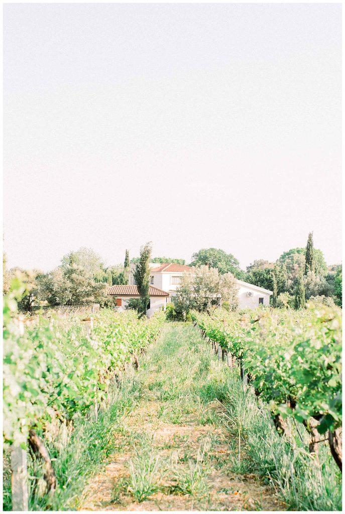 cansu kadir 26 687x1024 - Cansu & Kadir // Urlice Vineyards, Izmir